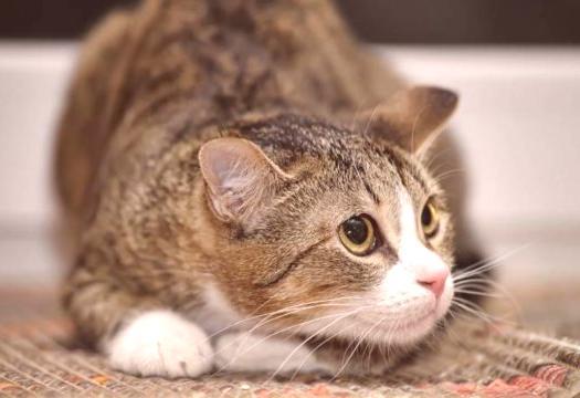Kočička obrázky tumblr